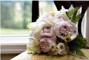 flowers:  Clumber Spaniels