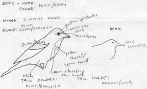 Most people run for a field guide when they see an unfamiliar bird, even those of us who know better. The best thing to do is to quickly write down everything you can remember about the bird, preferably while you are still looking at it. Draw a quick sketch that allows you to point to …