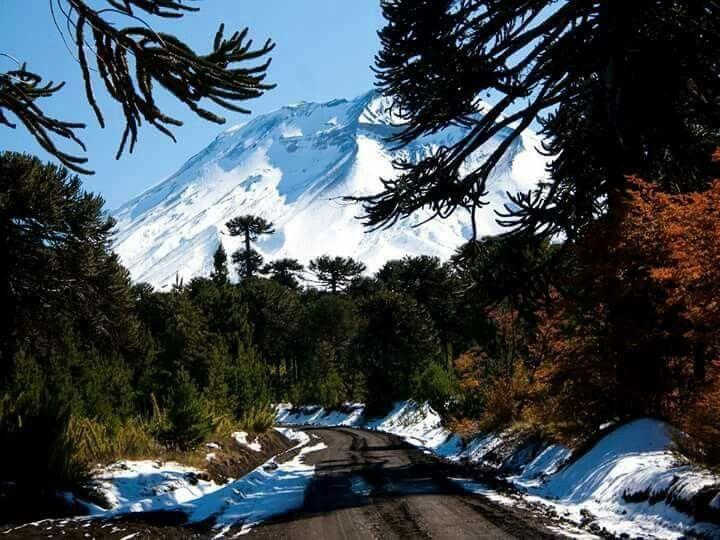 Parque Nacional Conguillio en Invierno.