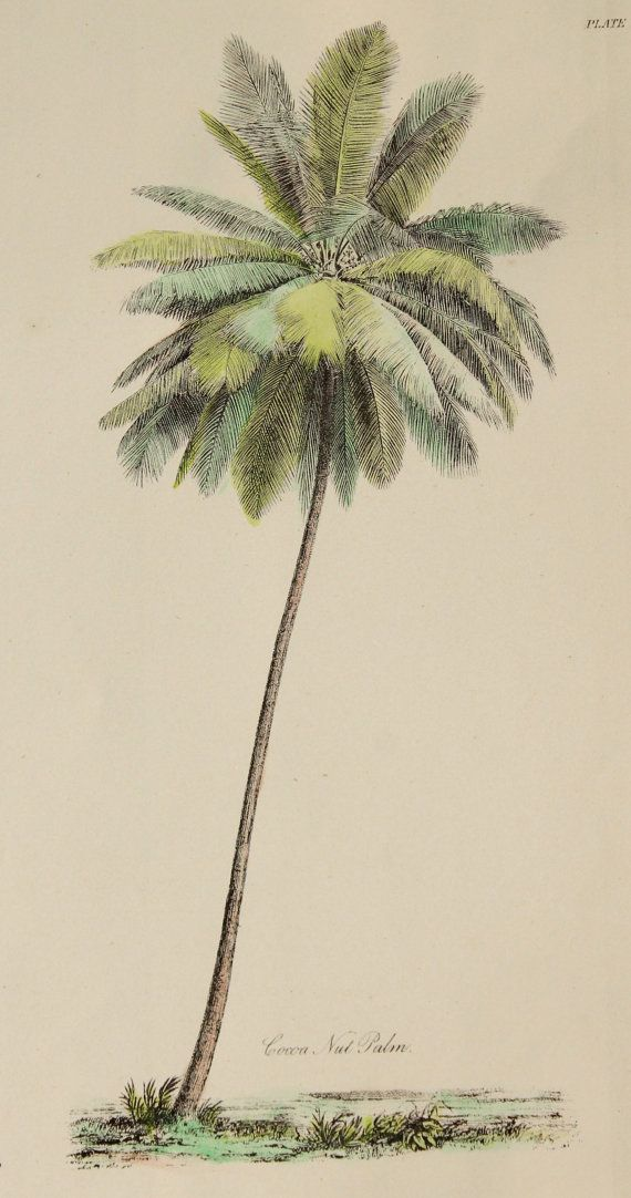 HANDCOLOURED Antique Palm Tree Print - Unique Victorian Colour Plate c.1880. Water colour palm tree picture. Genuine Victorian book plate. Hand painted. Hand coloured. Botanical tree print. Floral. Botany.