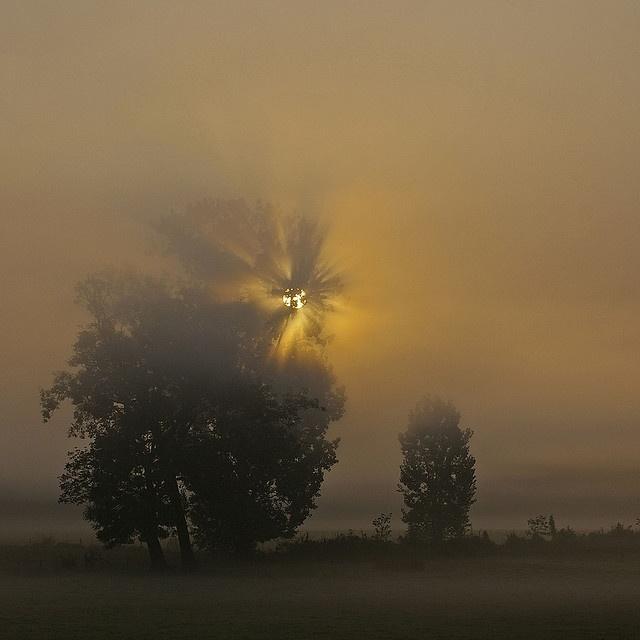 NetherlandsDreams Places, Photos Landscapes, Favorite Places, Mists Fog, Winter Fog, Places I D, Magic Trees, Dutch Only, Beautiful Holland
