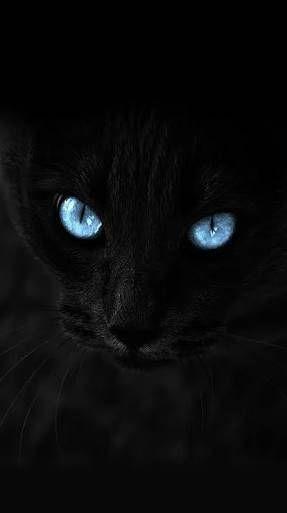 淡々とかっこいい猫の画像を貼るスレ : ハムスター速報
