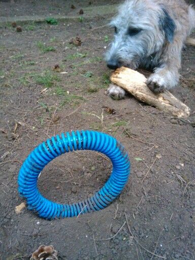 The toys of a lurcher