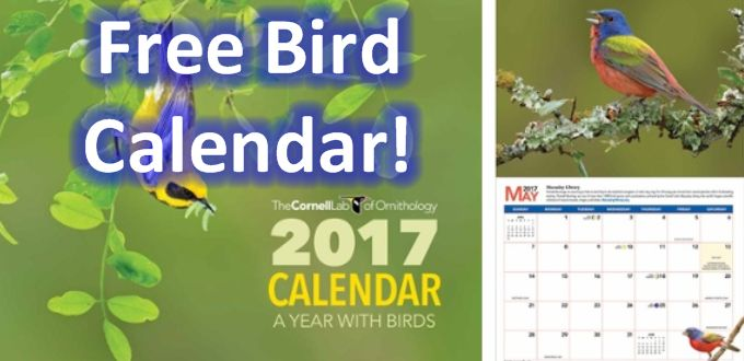 Cornell Ornithology Lab FREE 2017 Bird Calendar ⋆ The Best source of FREE STUFF…