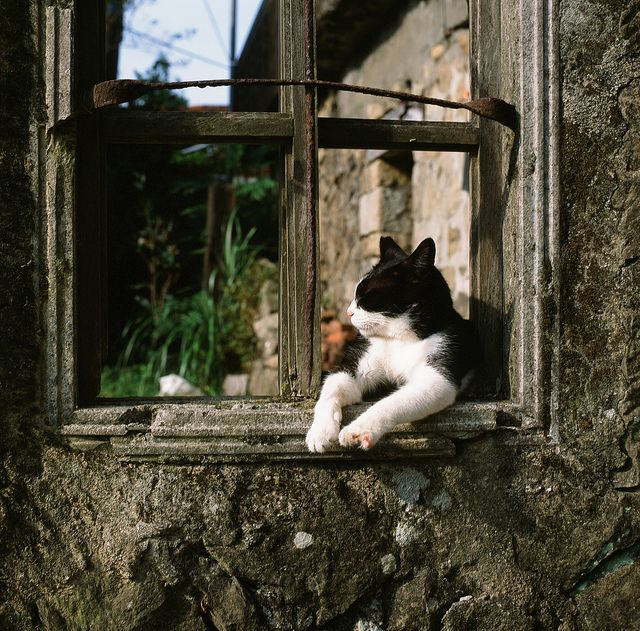 """""""It is in the nature of cats to do a little unescorted roaming."""" --Adlai Stevenson"""