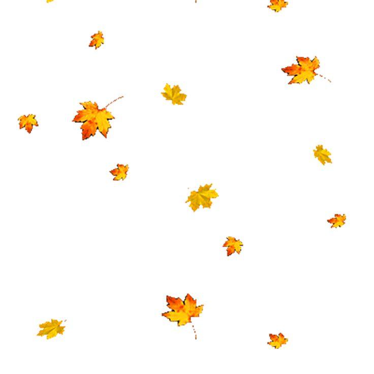 короткие падают листья картинки для презентации любители цветов