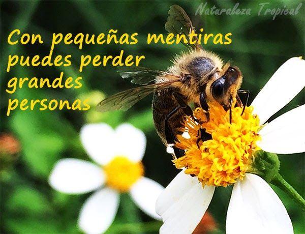 Postal con consejo valioso , abeja polinizando a una flor de romerillo de fondo