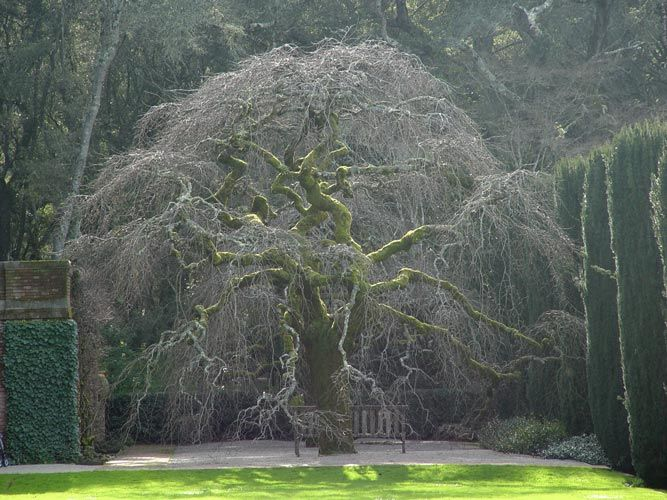 Elm tree. I would never get anything done if I had access to this tree. I'd just sit and stare at it all day.