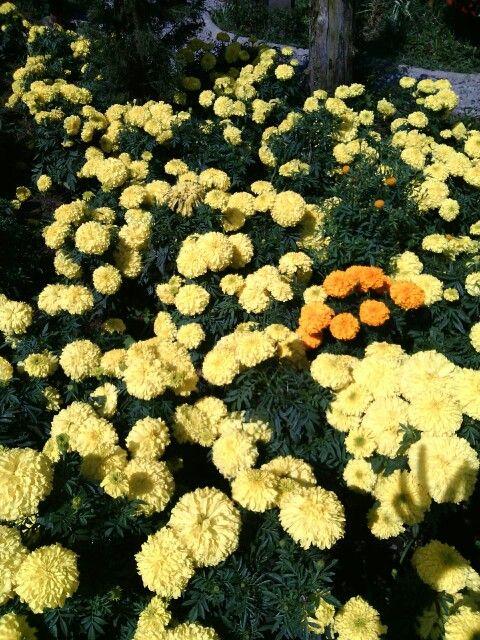 Kebun Bunga Begonia, Bandung, Jawa Barat