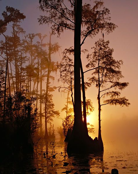 """Okefenokee Swamp also has a foot in Florida. Spreading over 438,000 acres, it is the largest peat-based swamp in North America and among the largest such swamps worldwide. Its original name means both """"bubbling water"""" and """"trembling earth"""" in the now extinct Hitichi language and was applied partly because of its spongy bogs.: Okefenok National, Sunsets, Beautiful, Trees, Georgia, National Parks, Public Domain, National Wildlife Refug, Okefenok Swamp"""