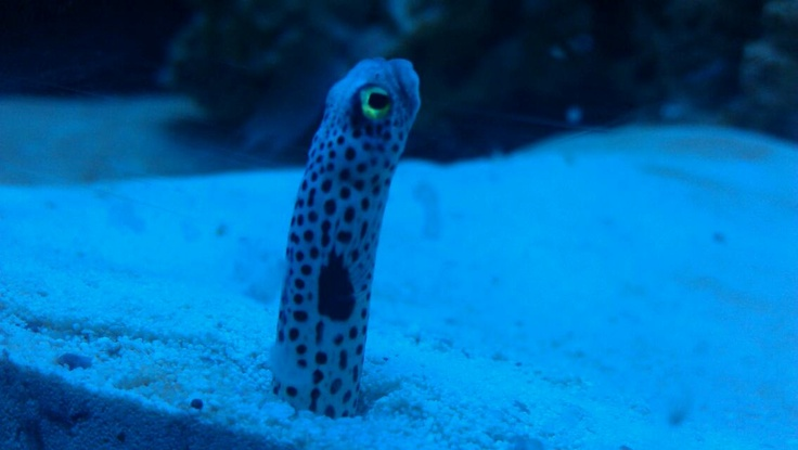 I wonder how he sees us and what he thinks of all these creatures staring at him all day... How weird it must be to live in an aquarium.: Creatures Stare
