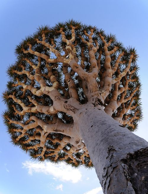 What an amazing tree!