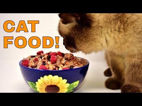 What Do Cats Eat 6 Common Human Foods Cats Can Eat