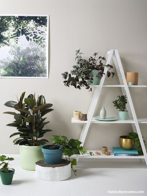 There's a reason Resene Tea is such a popular colour. It's versatile and has a warm biscuity feel. This wall is Resene Half Tea. http://www.habitatbyresene.co.nz/perfect-colours-low-light-rooms