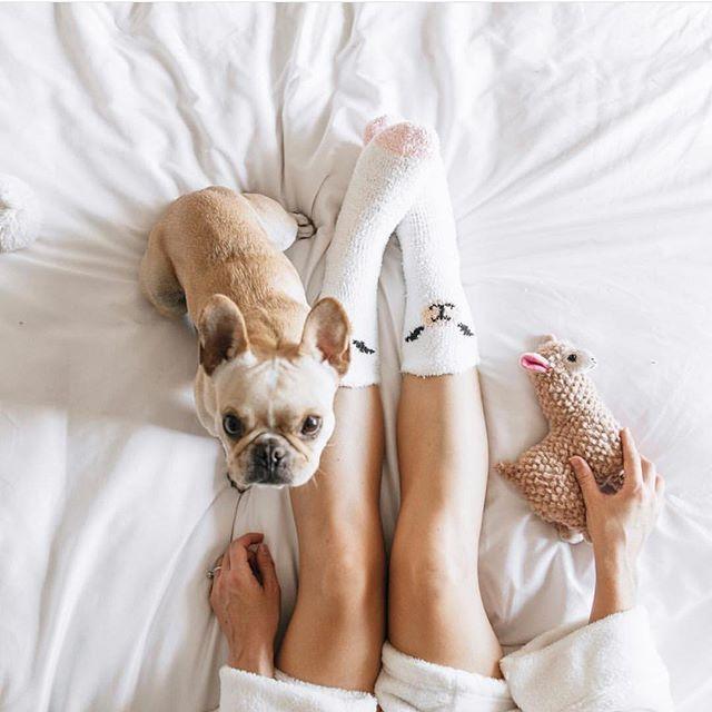 Bedtime Frenchieleo Bridgetandleo Dogs Cat Lovers