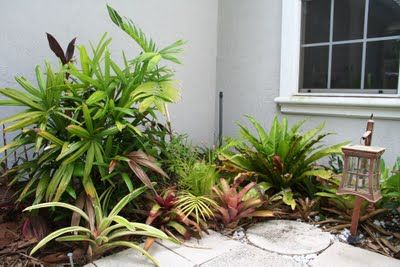 The Rainforest Garden: How To Plant a Lush Drought Tolerant Garden