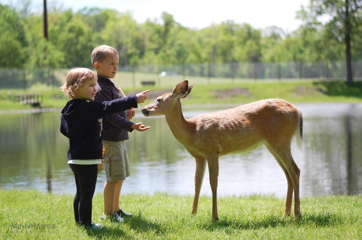 Near and Deer to My Heart: Fawn-Doe-Rosa Wildlife Park