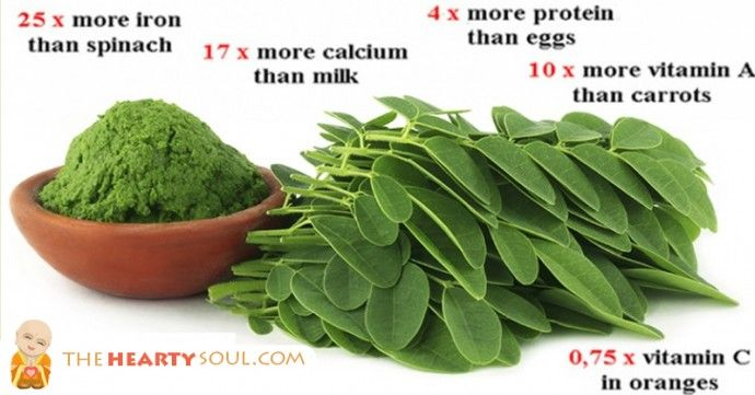 moringa fights cancer, 3x more iron than spinach, 4x more Vit A than carrots, high protein, potassium, Vit C, calcium