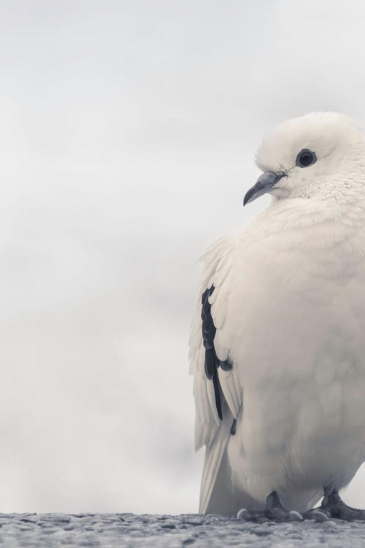 Photo by Kostya Naddubov. Discover more free photos from Kostya: https://www.pexels.com/u/kostya-naddubov-145939/ #nature #bird #animal