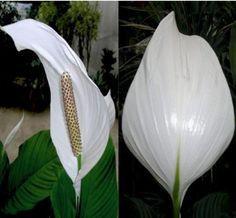 Se por acaso você tem uma destas 12 plantas em casa, você tem um tesouro e não sabe! | Cura pela Natureza
