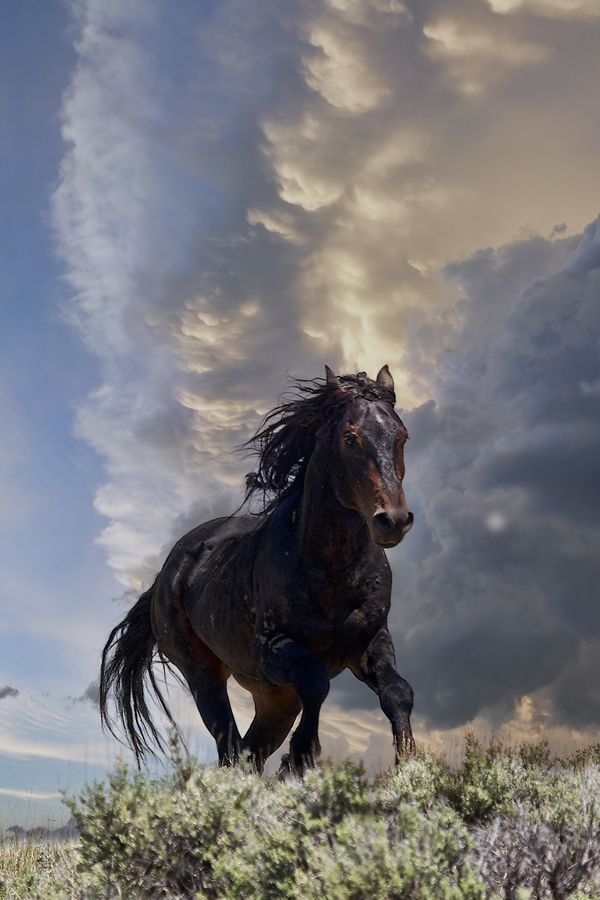 """Storm by Jana Thompson, via 500px; """"Mustang stallion in McCullough Peaks HMA, just outside of Cody, Wyoming."""""""