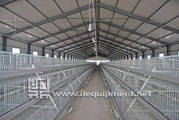 A frame Semi automatic broiler chicken cage-Hebei Dingtuo Machinery And Equipment Co., Ltd