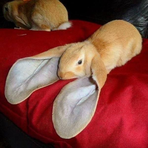 """Oh my word!! It's a real bunny. """"My, what big ears you have!"""""""