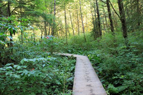 The Baden Powell Trail continues on a boardwalk