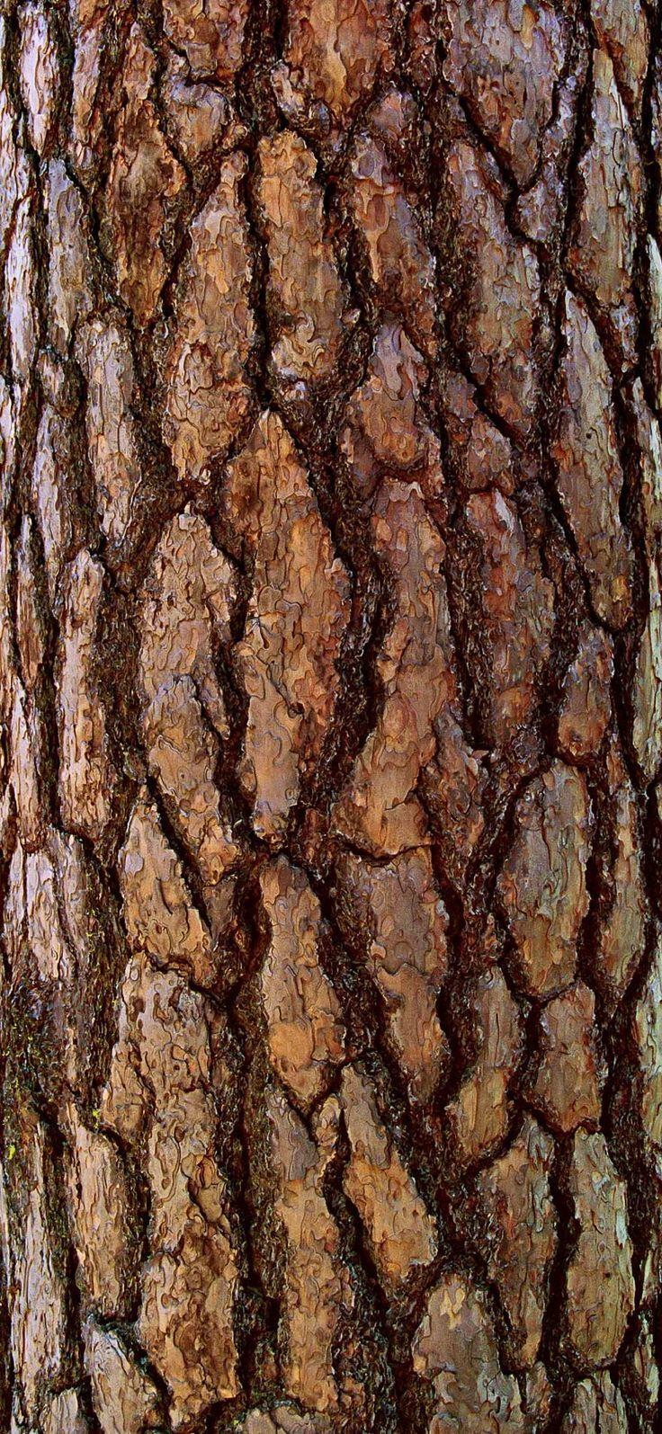 Brown Tree Bark Pantone Emperador Dark Chocolate Warm