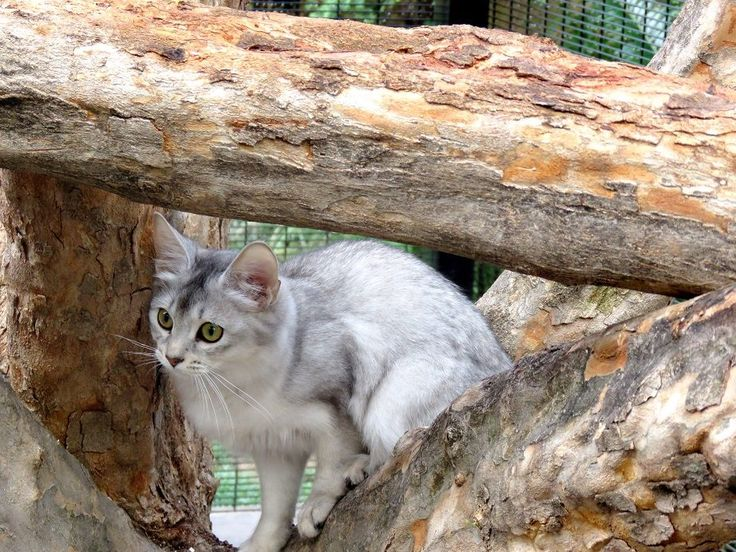 Peek-a-boo Luna in the  Fortress cattree