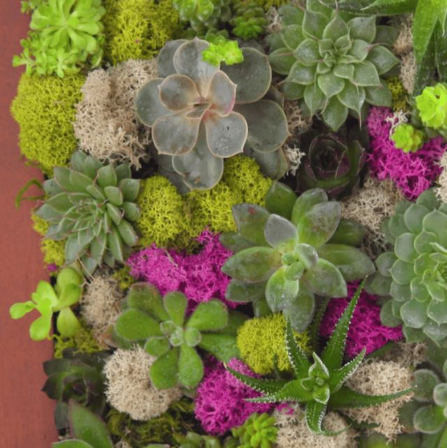 Do You Have An Extra Picture Frame Around The House? Now You Can Use It To  Create This Stunning DIY. Succulent Wall GardensSucculent ...