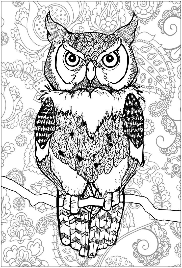 Owl Coloring Pages Owl Coloring Pages Animal Coloring Pages