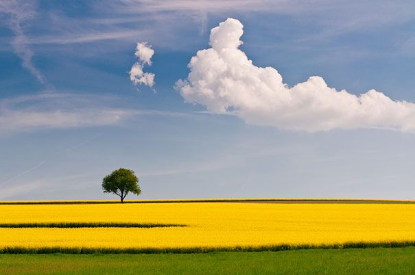 30 Amazing  Photos That Will Left You Without Words,Rapeseed And the Tree