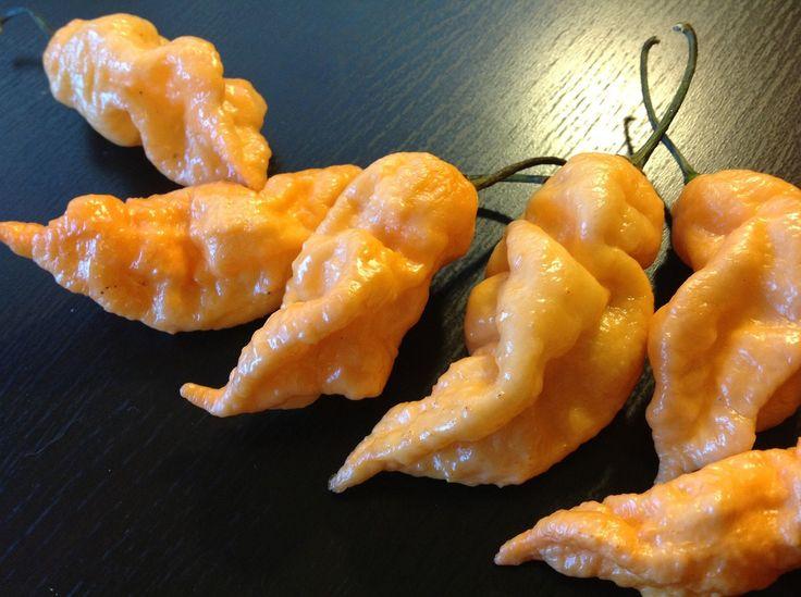 Peach Ghost Pepper Also Know As Peach Bhut Jolokia Pepper Seeds