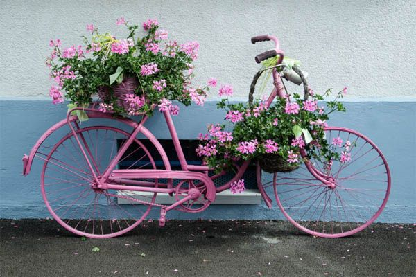 These are 15+ Amazing Bicycle Planter Ideas, making your garden decor more unique and stand out. You must be having an old bicycle in your garage