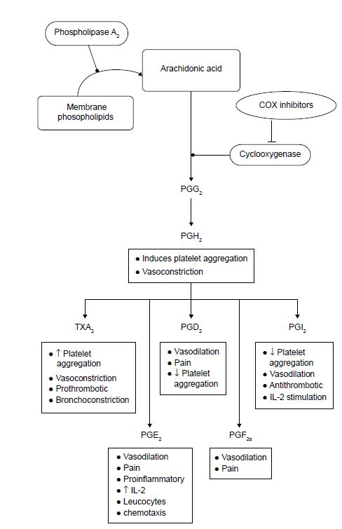 Figure 1 Cascade of metabolism of arachidonic acid by COX pathways.