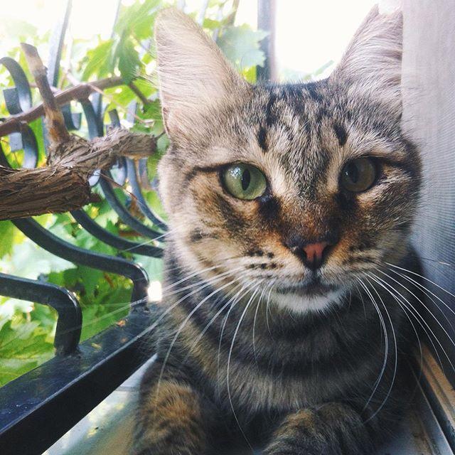 Fin #vsco #vscocam #izmir #cat #kedi #summer #hot #animal #iphoneonly #followme