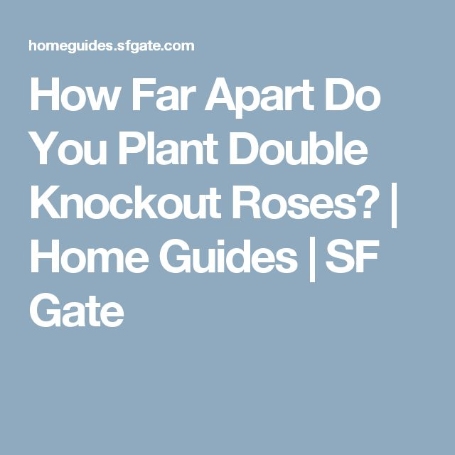 How Far Apart Do You Plant Double Knockout Roses? | Home Guides | SF Gate