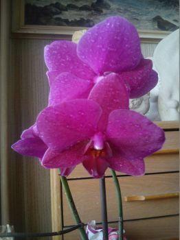 mé nové květy na orchideji (20 pieces)