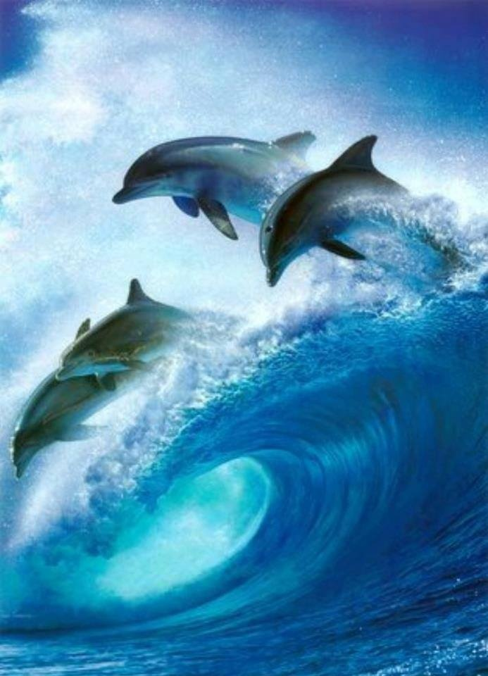 Swimming in the waves Ocean creatures, Sea animals, Dolphins
