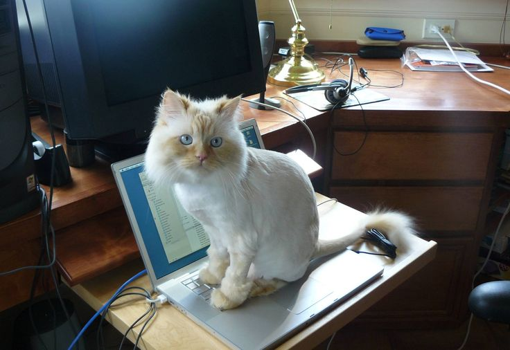 cat-on-mac1