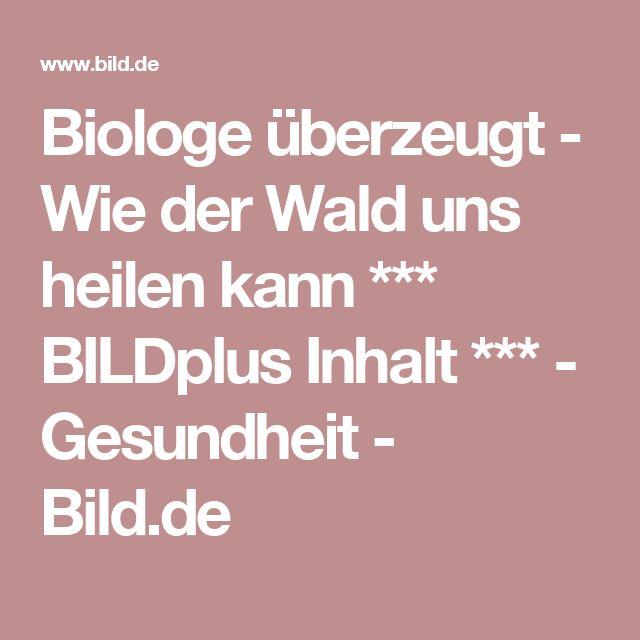 Biologe überzeugt  - Wie der Wald uns heilen kann *** BILDplus Inhalt ***  - Gesundheit - Bild.de