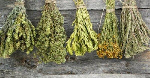 Πλήρης κατάλογος βοτάνων και οι θεραπείες τους – Μάθε τις ασθένειες που θεραπεύει κάθε βότανο!!! - http://biologikaorganikaproionta.com/health/197268/