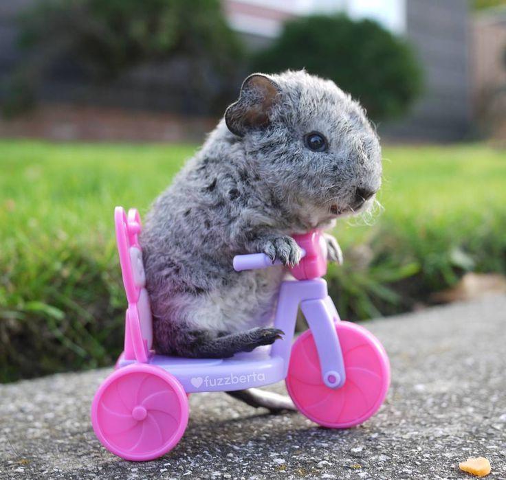 """Ehn! Ehn!"" Lil Billy Blob is trying to trike uphill  Fuzzberta.etsy.com"