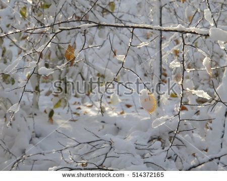 sunlight in the deep snowy forest