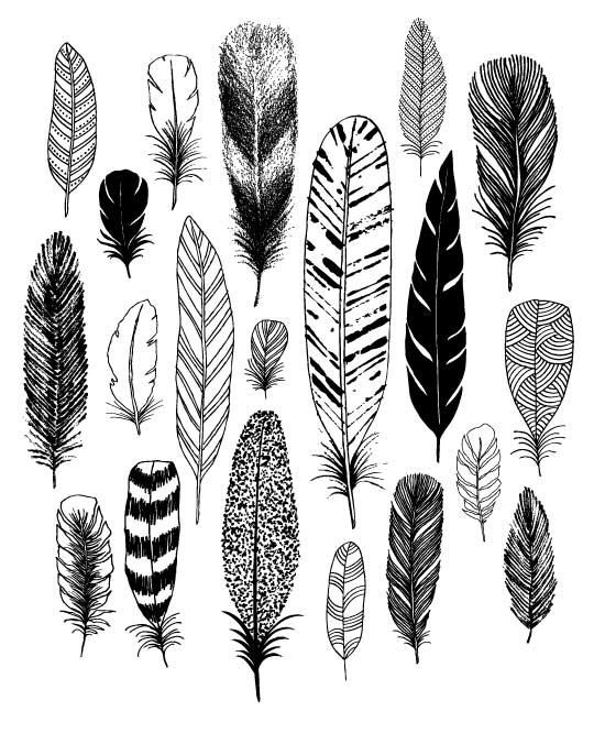 Feathers, limited edition giclee print by Eloise Renouf on Etsy