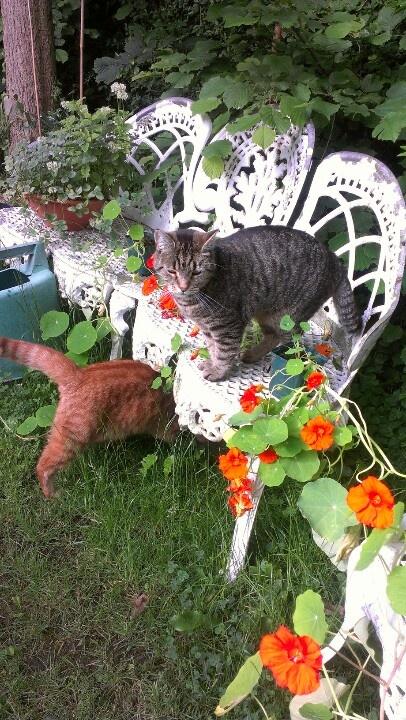 Roxy & Remus.