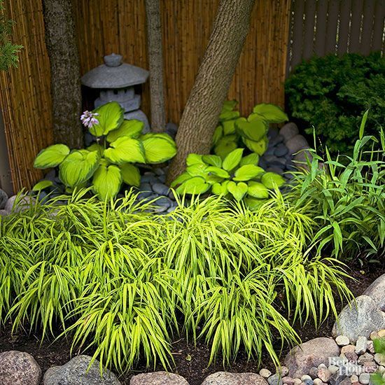 Shaded sections of the Japanese garden rely on subtle color contrast and bold textural differences to create interest. Here chartreuse and green hostas surround the base of a tree while variegated hakone grass softens the edge of the bed.
