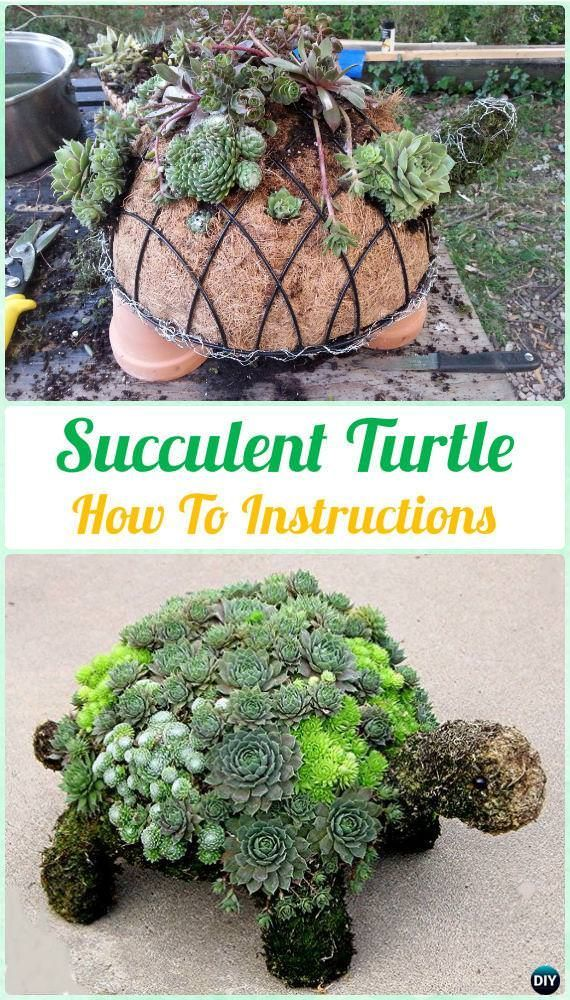 Succulents are easiest plants to grow indoors and look great, and if you#39;re in need of some refreshing display ideas using succulents. Here#39;s the post!