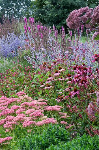 Pink sedum, echinacea, Russian sage, and spiky bright purple liatris in mid-late Summer. The tallest shrub, Eupatorium maculatum 'Gateway' Joe-Pye Weed, is a prairie native, and should do well in the Intermountain West.